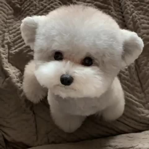 Watch This little guy looks like a teddy bear GIF by teistom (@teistom) on Gfycat. Discover more related GIFs on Gfycat