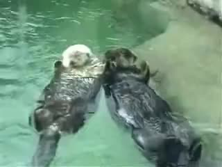 Holding Hands, Love Otters GIFs
