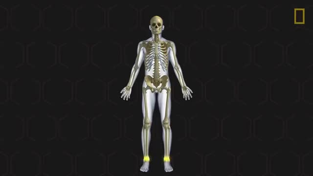 Watch Human Body 101   National Geographic GIF on Gfycat. Discover more Digestive, Natgeo, SCIENCE, Survival, anatomy, animals, cardiovascular, circulatory, discover, endocrine, lymphatic, nature, plivjpdlt6aprpidjp1zjroockru-89q1_, plivjpdlt6aps5feuq8c-i7wwpvx3w0blc, reproductive, respiratory, skeletal, systems, urinary, wildlife GIFs on Gfycat