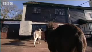 Animals, BBC, Clever, Cow, Critters, Dawn, Donkey, Food, French, Pig, Donkey Escape Artist - Clever Critters - BBC Pets & Animals GIFs