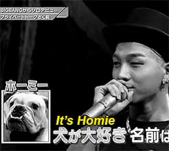 Watch BigBang & Stuff GIF on Gfycat. Discover more $waggy american slang in all its forms, (-but that poor dog's permanent face in the corner lmfao), (he looks so unamused and hopeless), (hello i am tumblr user seungripls and im not actually an adult i am actually 12 years old), (i feel you Homie - i've been there too), (like this has happened too many times to him, (…and by things i mean all the possible versions of his name under the sun), *whispering*, -is /real/, Bae, Bae:gifs, a minute of silence for all the poor MCs all around the world, and pronounce, bigbang, i laughed so much at this, mybigbangedit, taeyang, this dog has /heard/ things), those eyes… they are the eyes of a survivor…, who have had to pretend to understand GIFs on Gfycat