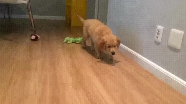 Watch and share Sneak Attack GIFs by HoodieDog on Gfycat