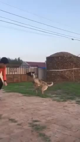 Watch and share Smart Dog GIFs and Super Dog GIFs by saleh on Gfycat