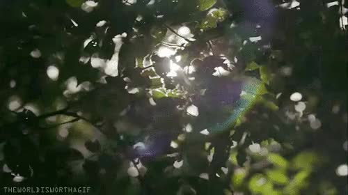 Watch and share Water The Plant GIFs on Gfycat