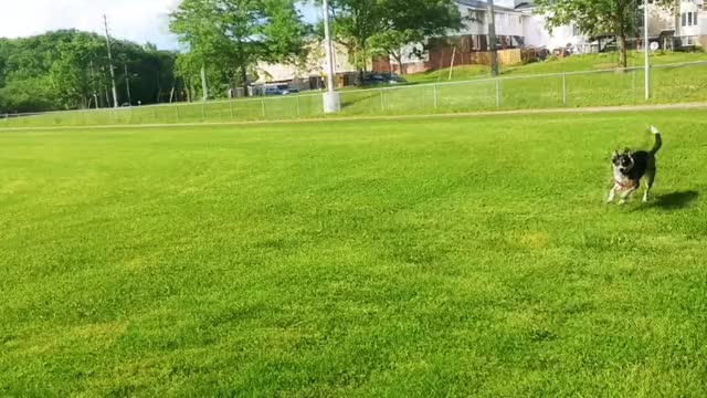 Watch and share Seasonal Dog Frisbee GIFs by canadiansatirex on Gfycat