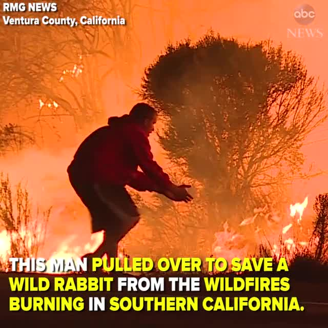Watch Man saves wild rabbit from wildfire GIF by @sil130 on Gfycat. Discover more related GIFs on Gfycat