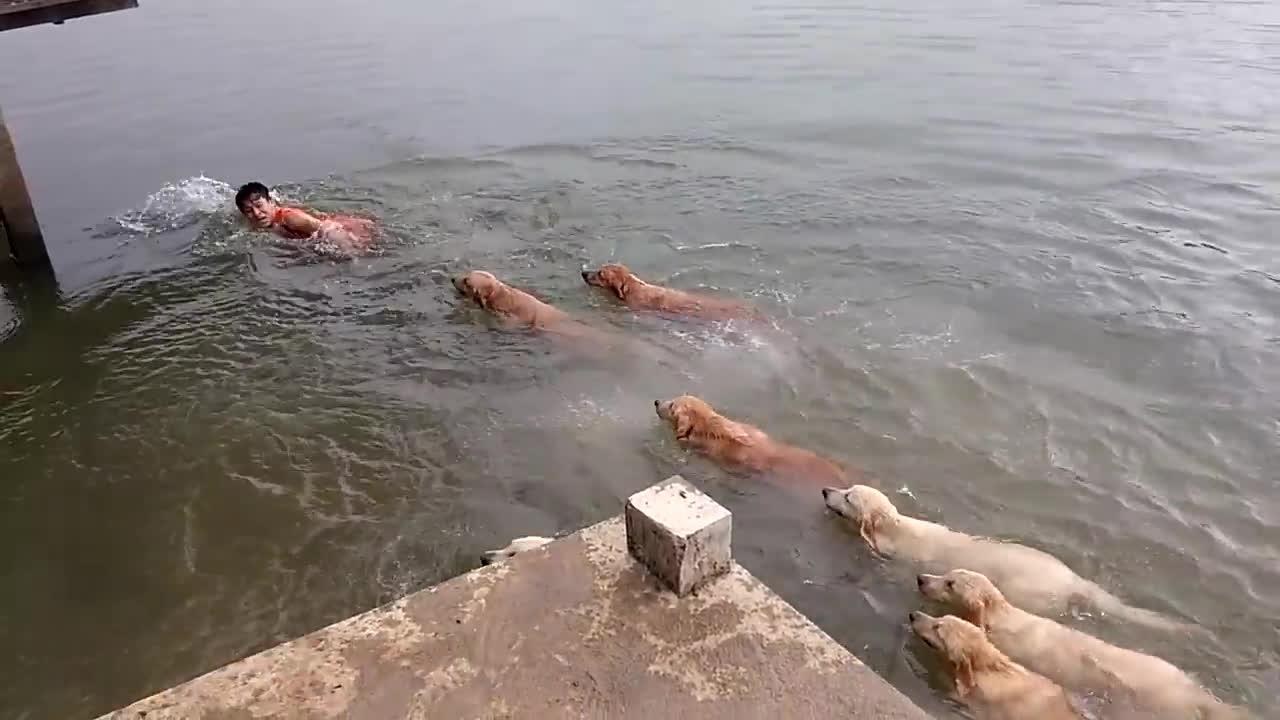 bottlenose, dog, funny, hawaii, natureisfuckinglit, /r/natureisfuckinglit : dolphins are so beautiful GIFs