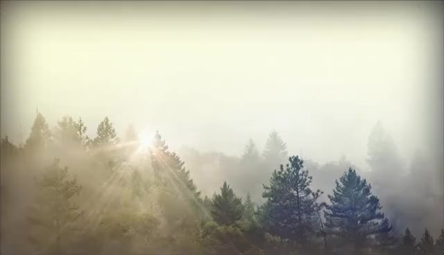 Watch and share Trees And Fog Motion Worship GIFs on Gfycat