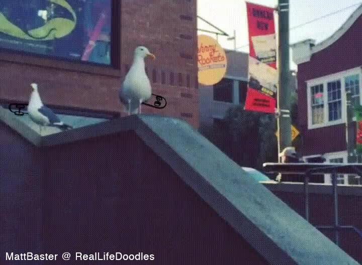 reallifedoodles, SkateBird GIFs