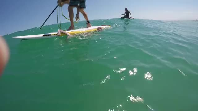 Watch Giant squid wraps its tentacles around my paddle board! GIF by PM_ME_STEAM_K3YS (@pmmesteamk3ys) on Gfycat. Discover more amazing, cape town, giant squid, incredible, melkbosstrand, ocean, paddle board, sup, surf, weird animals GIFs on Gfycat