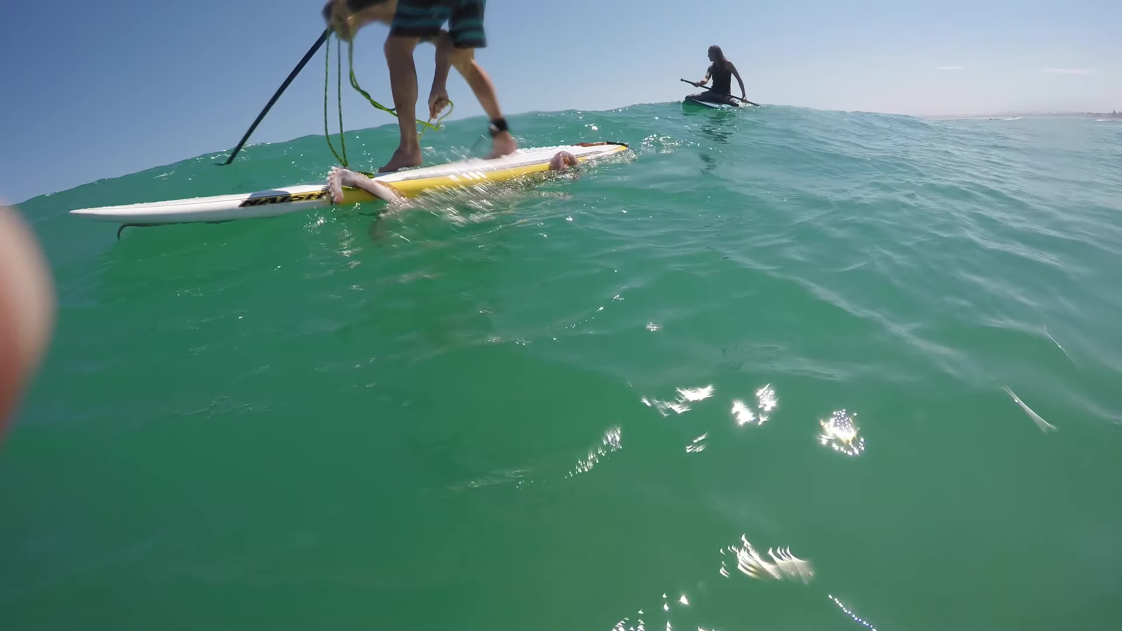 amazing, cape town, giant squid, incredible, melkbosstrand, ocean, paddle board, sup, surf, weird animals, Giant squid wraps its tentacles around my paddle board! GIFs