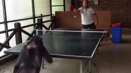 Watch and share Ping Pong GIFs by mslaika on Gfycat