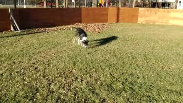 Watch and share Infinite Zoomies GIFs by canadiansatirex on Gfycat