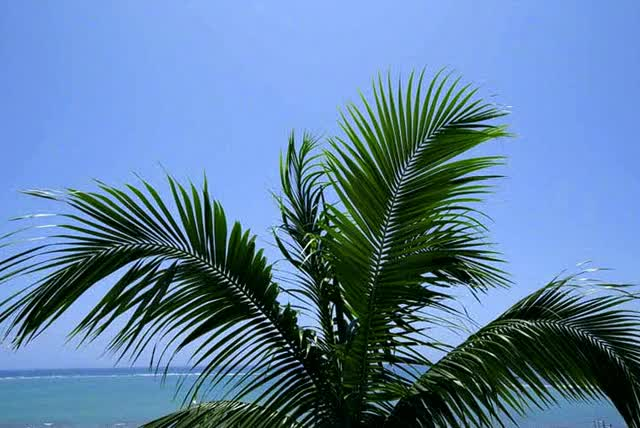 Watch and share Travel Photo: An Animated Palm Tree In The Breeze GIFs on Gfycat