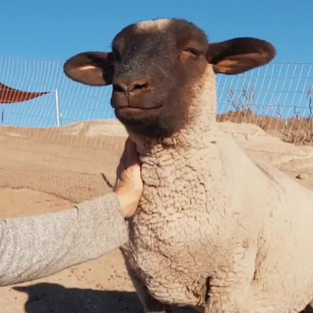 Watch and share Sale Ranch Animal Sanctuary GIFs by b12ftw on Gfycat