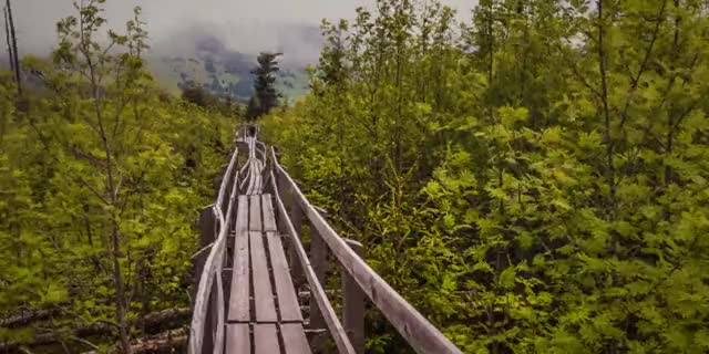 Watch this nature GIF by Наташа Лаврентьева (@cleopatra) on Gfycat. Discover more forest, nature, road GIFs on Gfycat