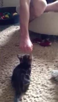 MadeMeSmile, mademesmile, Tiny Fist Bump (reddit) GIFs