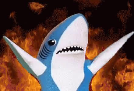 animals, fish, left shark, shark, shark week, Left Shark GIFs