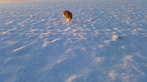 Kody, Sammy, amazing, animals, bordercollie, breathtaking, dogs, gif, gifs, morning, pets, puppy, running, scenery, sheltie, shetlandsheepdog, snow, sunrise, throwback, view, winter, kyleandkody:Sunrise /w Kody GIFs