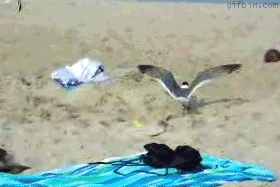 Harmontown, catching seagull at the beach GIFs