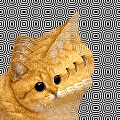 Watch and share Psychedelic Cat GIFs on Gfycat