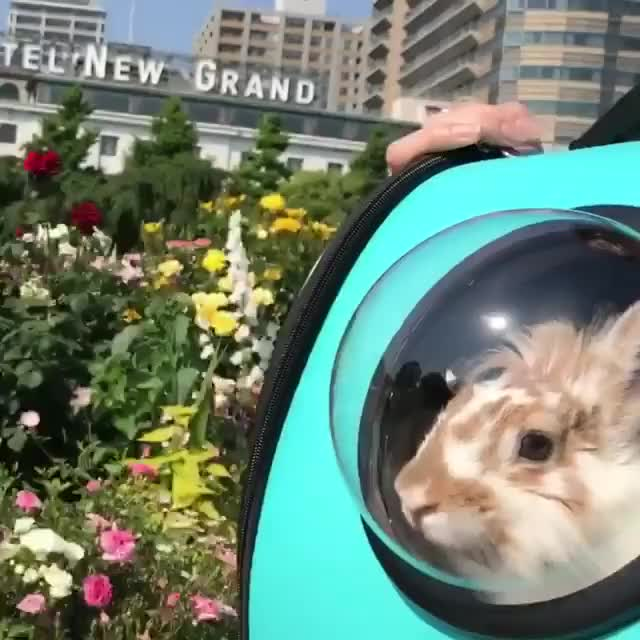 Watch and share Rabbitgifs GIFs and Rabbit GIFs by cakejerry on Gfycat
