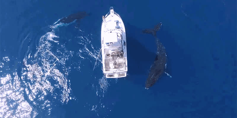 boat, whale, 3 whales under a boat GIFs