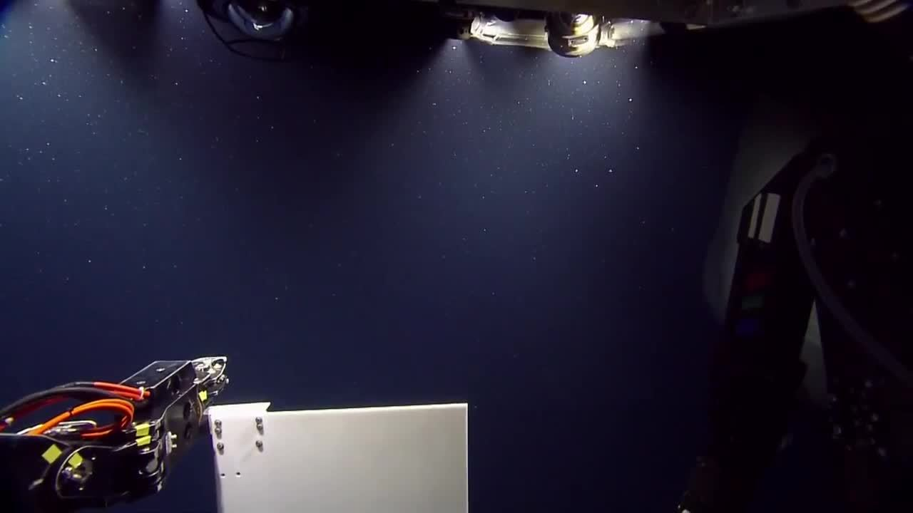 TheDepthsBelow, thalassophobia, Sperm whale swims by ROV (reddit) GIFs