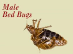 Watch and share Images Bed Bugs GIFs on Gfycat