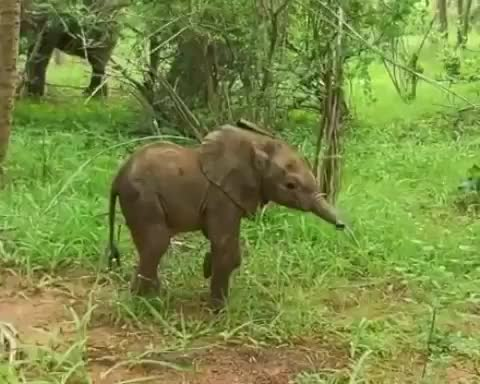 Watch and share Birthday GIFs and Elephant GIFs by vani  on Gfycat