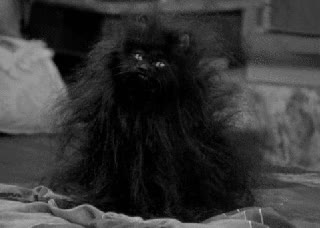 Watch and share Bad Hair Day GIFs on Gfycat