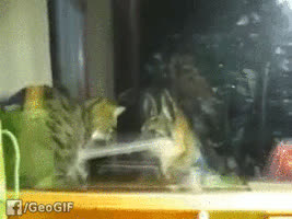 hitmanimals, Fight fire with fire! (media..com) GIFs