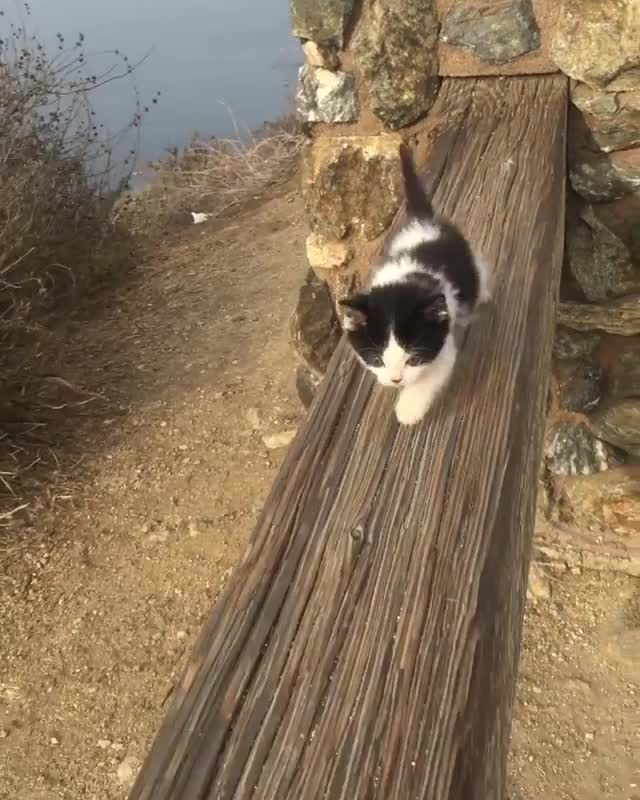 Hiking the coast GIFs