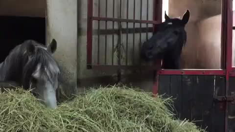Hay, it's a stable relationship. GIFs