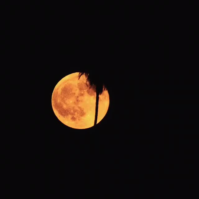Watch and share Harvest Moon 🌙 GIFs by 121gigawatt on Gfycat