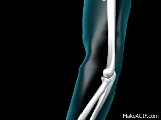 Watch Elbow Joint - 3D Medical Animation || ABP © GIF on Gfycat. Discover more related GIFs on Gfycat