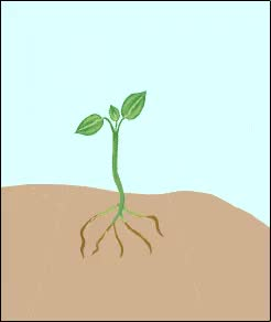 Watch growth GIF on Gfycat. Discover more related GIFs on Gfycat