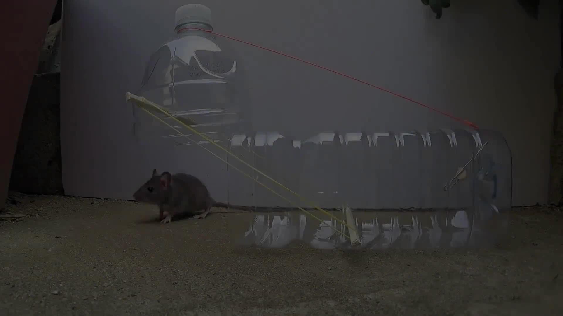 Disposable cup rat/mouse trap, Electric fan guard bird trap, How to make a mousetrap, Imaginative Guy, bird trap, mouse trap, paper mouse trap, water bottle art, 쥐덫만드는방법, 패트병쥐덫, instant regret GIFs