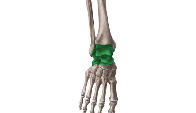 Watch and share Most Commonly Broken Bones In The Human Body |Kenhub GIFs on Gfycat