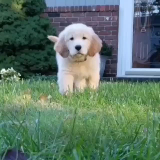 Watch and share Puppy GIFs and Dog GIFs by tothetenthpower on Gfycat