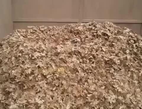 Watch and share Cachorro Brincando Com As Folhas GIFs on Gfycat