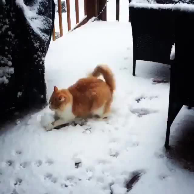 Watch and share /r/CatsBeingCats - From Dopey_the_cat_ GIFs on Gfycat