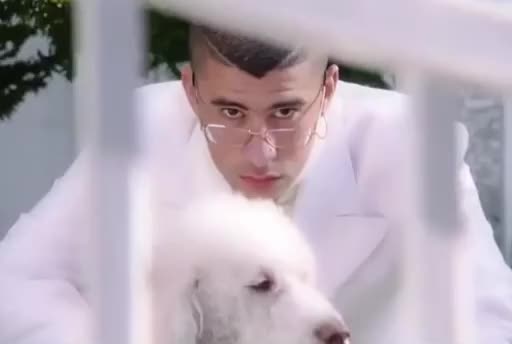 Watch this curated GIF by The GIF Farmer (@giffarmer) on Gfycat. Discover more bad, bunny, disappointed, dog, estuviesemos, eyes, glasses, juntos, look, pet, puppy, serious, si, stalk, stalker, watching, wedding, whatever, white, you GIFs on Gfycat