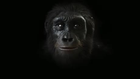 Watch and share 6-million-years-of-human-evolution GIFs by benz77 on Gfycat