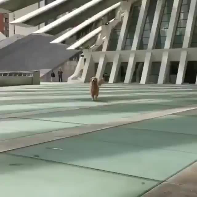 Pupper is proud to be able to walk themselves GIFs