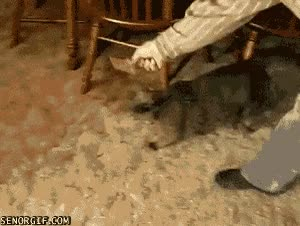 Watch nope nope nope cat GIF on Gfycat. Discover more related GIFs on Gfycat