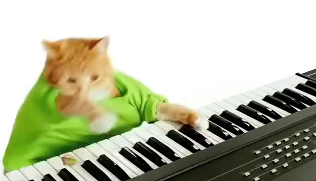 Watch keyboard cat GIF on Gfycat. Discover more keyboard cat GIFs on Gfycat