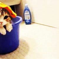 Watch ribbon GIF on Gfycat. Discover more related GIFs on Gfycat