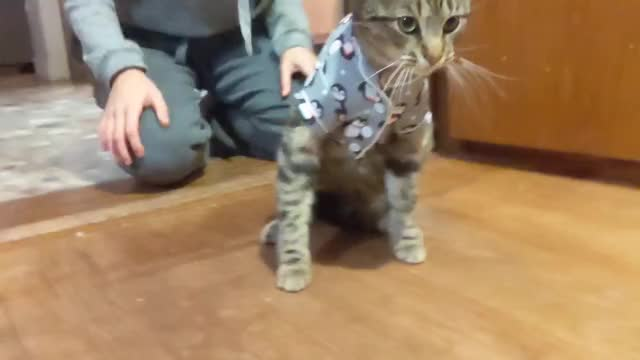 Watch this cat GIF by Pakalu Papito (@entfanatic) on Gfycat. Discover more cat, cat in pajamas, cute, funny, kitten, kitty, meow, pajamas, pussy, pussy cat GIFs on Gfycat