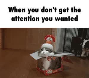 Watch attention GIF on Gfycat. Discover more related GIFs on Gfycat